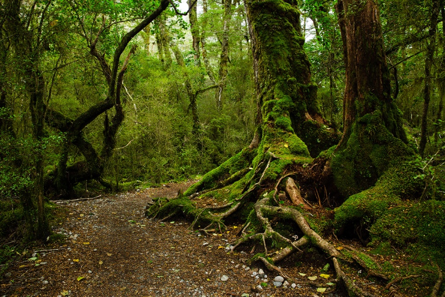 The Complete Guide To The Milford Track Independent Walk